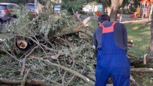 В Курортном районе ликвидируют последствия урагана