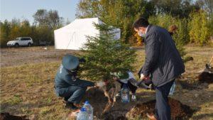 В Кронштадте прошла экологическая акция «Русский лес»
