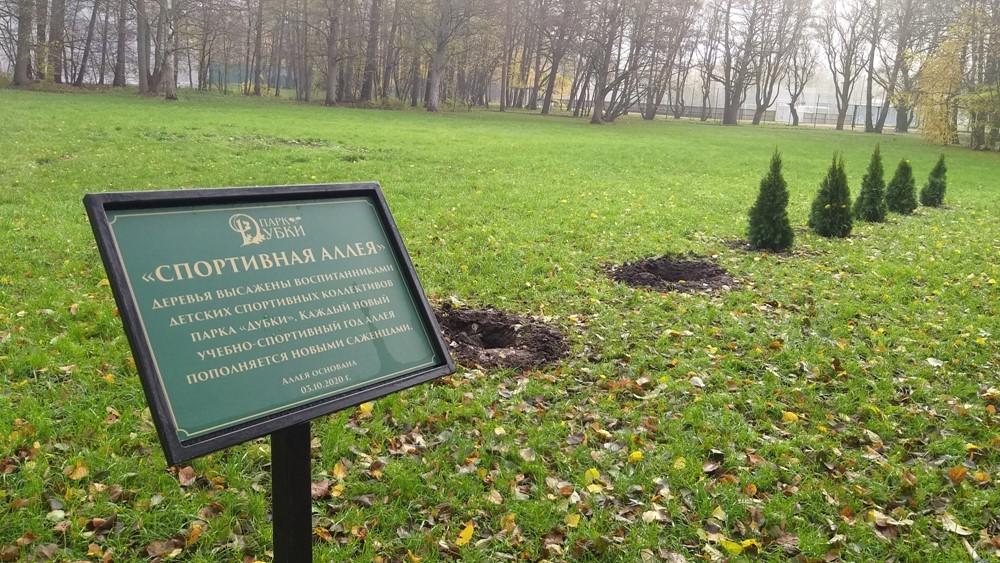 Из парка «Дубки» исчезли деревья, посаженные детьми