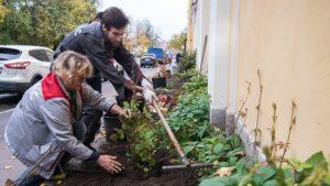 100-летние виноградные лозы вернулись в Кронштадт из питомника