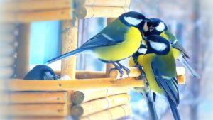 В «Синичкин день» пернатых обитателей парка «Дубки» угостят лакомствами