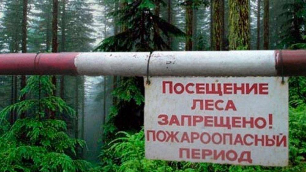 В Санкт-Петербурге введен запрет на посещение городских лесов