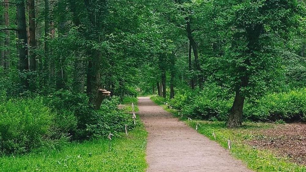 В Курортном районе пройдет общественное обсуждение работ в парках Сестрорецка