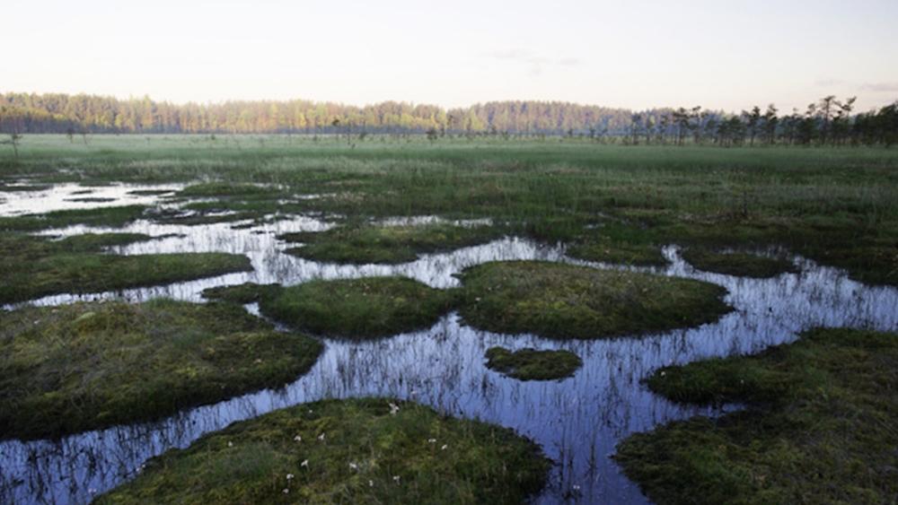 В Курортном районе усилят охрану заказника «Сестрорецкое болото»