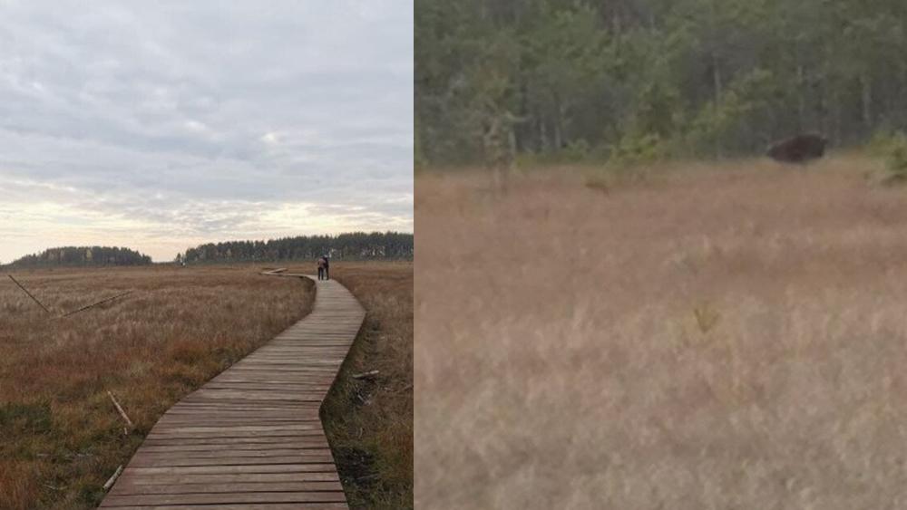 В заказнике «Сестрорецкое болото» увидели медведя